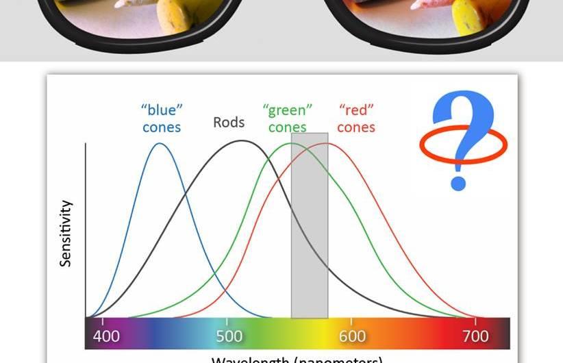 Ako fungujú okuliare na farbosleposť?