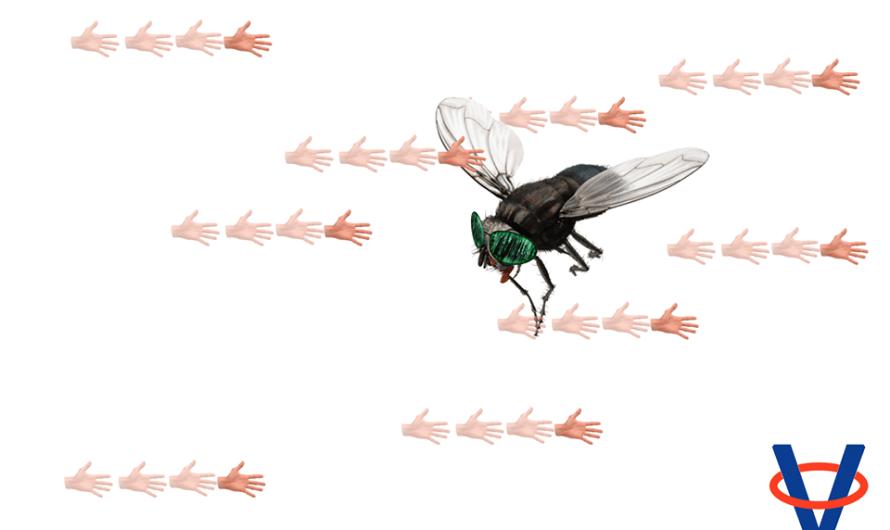 Prečo je tak ťažké zabiť muchu