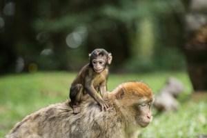 Biologický altruizmus
