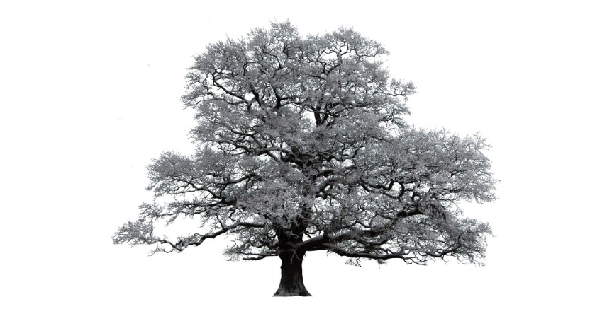Prečo nie je studené drevo studené?