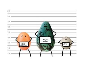 Tvar vajíčka