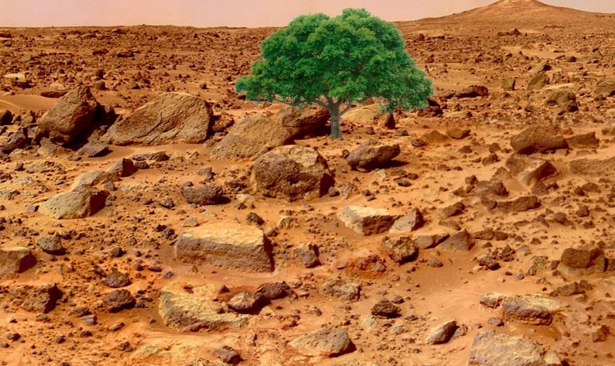 Prvý strom na Marse
