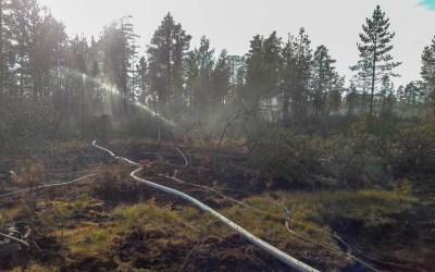 Sommaren då Sverige brann