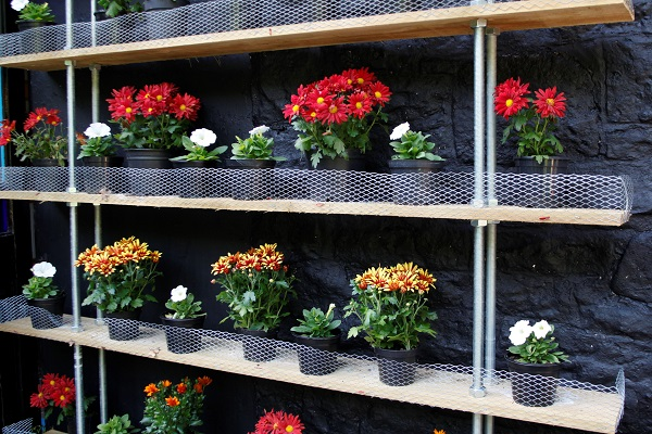 Flower Shelves at Veddw Copyright Anne Wareham