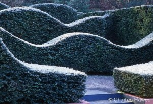 Veddw - South Garden - Hedges 1