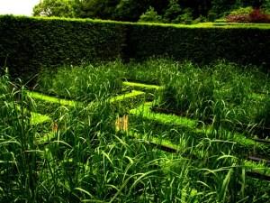 Cornfield Garden at veddw, South Wales garden, copyright Anne Wareham
