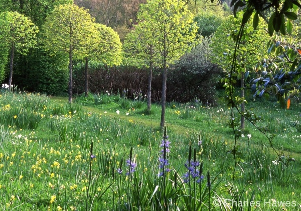 Veddw - North Garden - Meadow 1