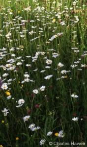 Veddw - North Garden - Meadow 3