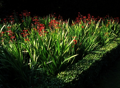 The Triangle, Veddw, Crocosmia Copyright Charles Hawes