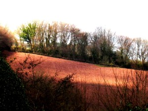 View from Veddw garden copyright Anne Wareham