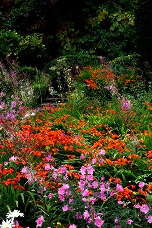 Wild Garden, late summer, Veddw, copyright Charles Hawes