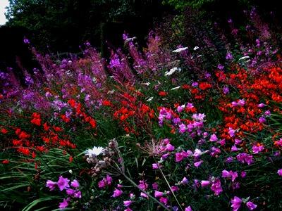 Wild Garden Veddw South Wales Garden Attraction, copyright Anne Wareham rosebay willow herb and crocosmia