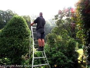Niwaki Ladder at Veddw copyright Anne Wareham.