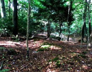The boundary ditch in the woods Copyright Anne Wareham