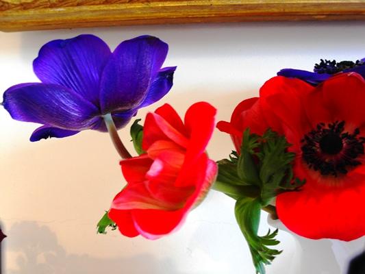 Anemones Copyright Anne Wareham, Veddw