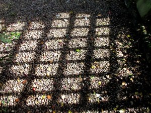 October Veddw 103 trellis shadow Copyright Anne Wareham