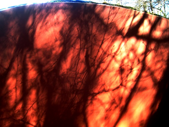 Shadow on the Ruin wall, Veddw. Copyright Anne Wareham.