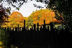 fence-at-veddw-copyright-anne-wareham-