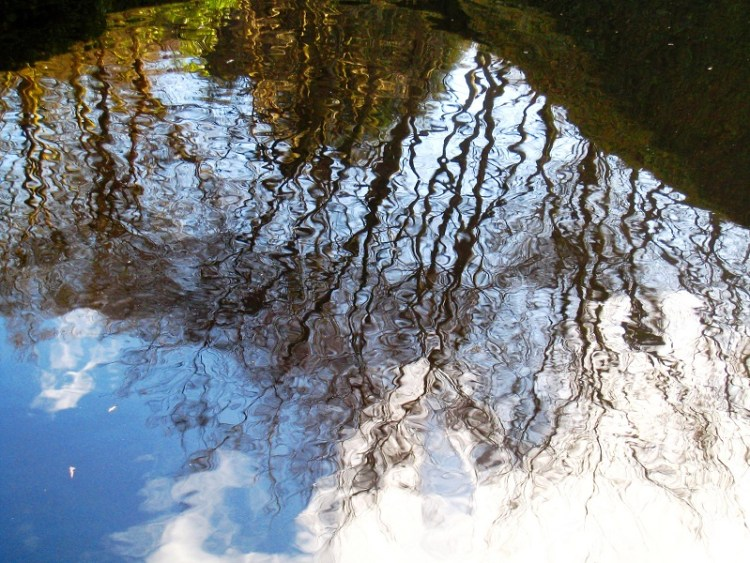reflections, Veddw Copyright Anne Wareham
