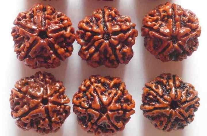 5 Mukhi and 6 Mukhi Rudraksha