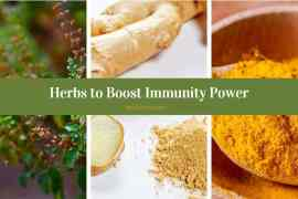 Herbs-To Boost Immunity Power