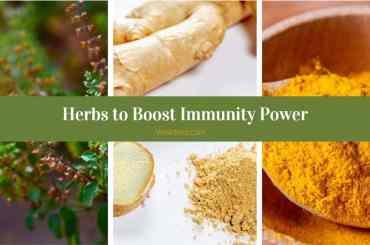 Herbs-To Boost Immunity Power