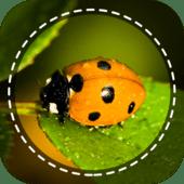 Bug identifier app
