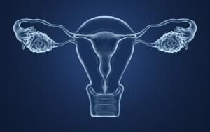 illustration of the vagina
