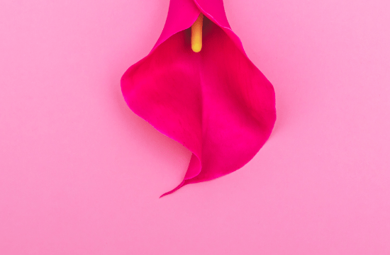 pink flower on pink background representing the vagina and vaginal numbness