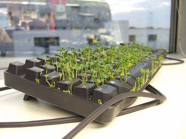 "weed-in-keyboard-prank ""width ="" 669 [19659019] Fuente: <a href="
