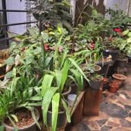 bern's beautiful garden. bangalore, india. november 2015.