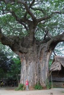 Malou onder een enorme baobab!