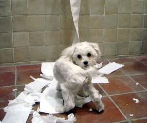 Il cane mi fa i dispetti Ansie da separazione  VegAmami