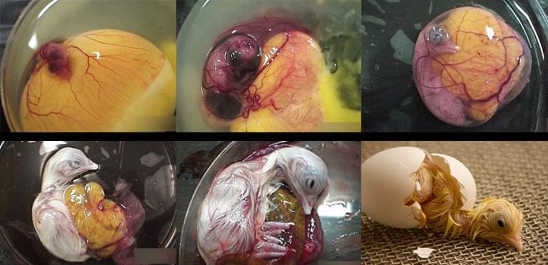 雞蛋的4個噁心真相! | 食 物 知 情 權