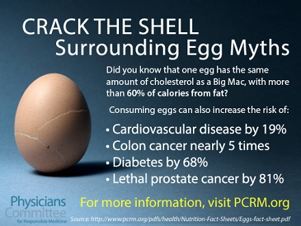 Image of Cracking Egg Myths: one egg has the same cholesterol as a big Mac, with more than 60% of calories from fat? Consuming eggs can also increase the risk of cardiovascular disease by 19%, colon cancer nearly 5 times, diabetes by 68%, Lethal prostate cancer by 81%. For more information visit PCRM.org
