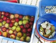 Äpfel waschen und vierteln
