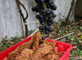 Apfelpressrückstände zum Düngen