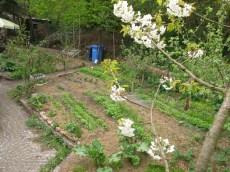 Biotopgarten Gemüseflächen