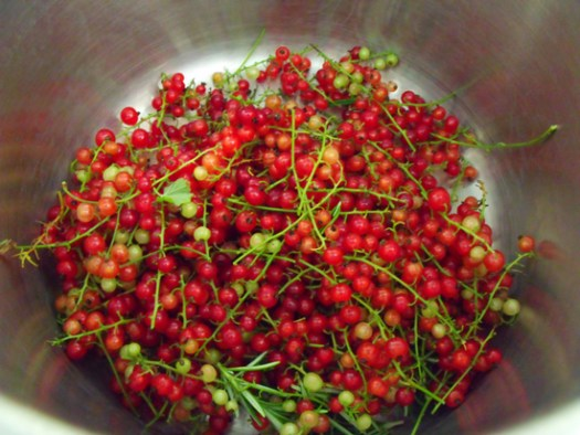 redcurrants ready for making redcurrant jelly
