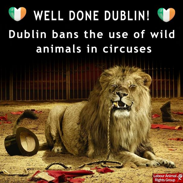 Modern Family Hd Wallpapers Dublin May Ban Animals In Circuses