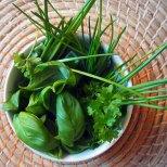 20gms. fresh herbs: parsley.basil.chives.