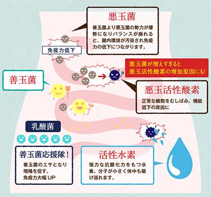悪玉菌と活性酸素