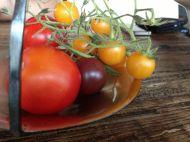 Tomatiges.