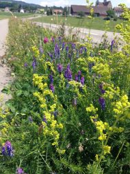 Blumen am Strassenrand