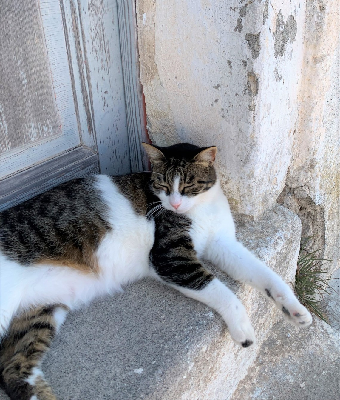 cats of the cyclades