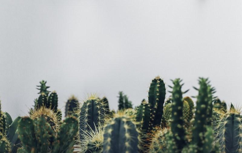 karmin vegan kaktus