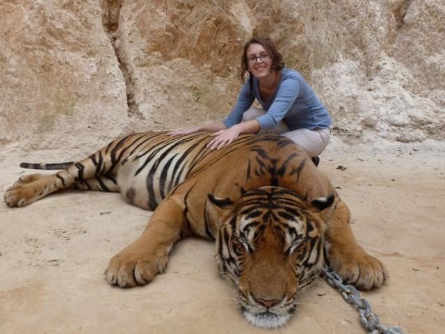 Rabságra ítélve. Forrás: Tiger Temple Thailand