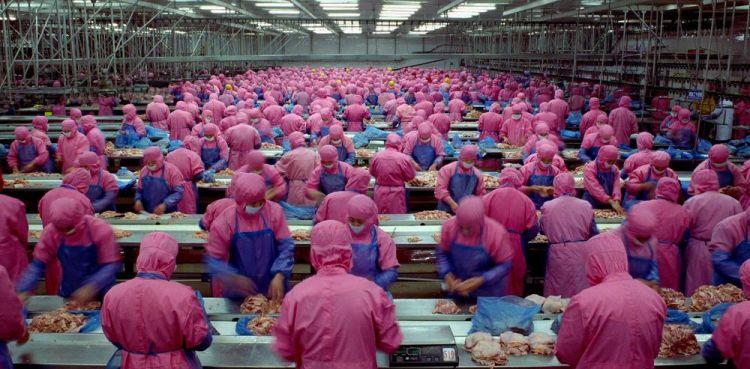 Amit nem tudtál a húsiparról