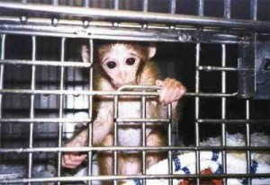 experimentación animales