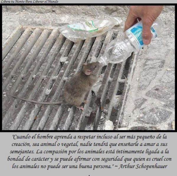 Schopenhauer cuando el hombre aprenda a respetar animales